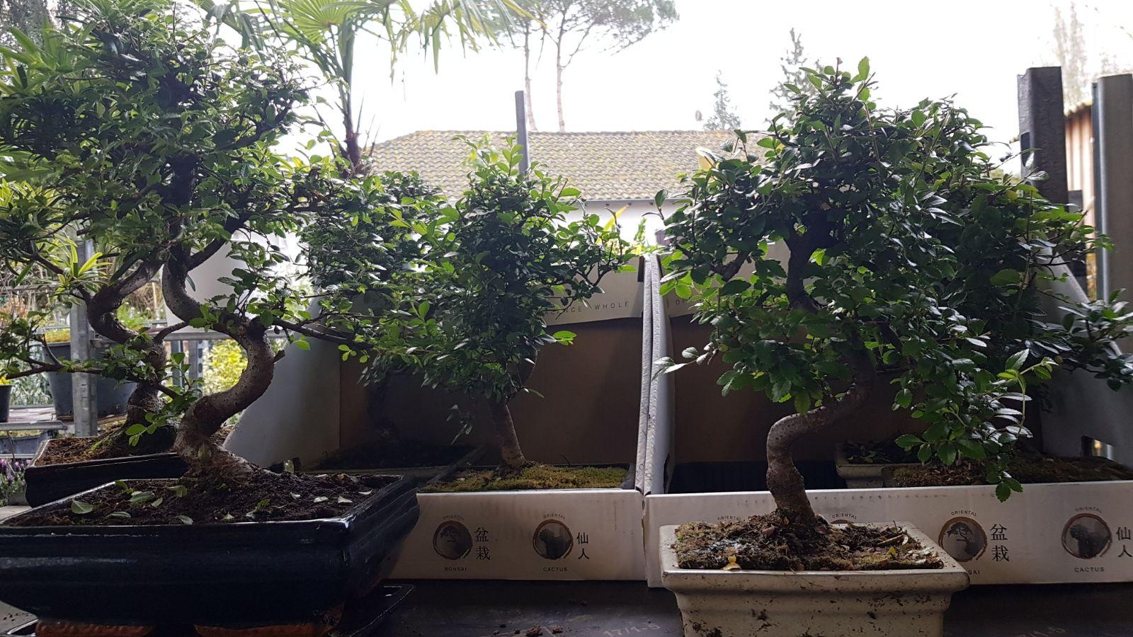 bax destockage vegetal et horticole toulouse 31790 - 06.49.95.06.96