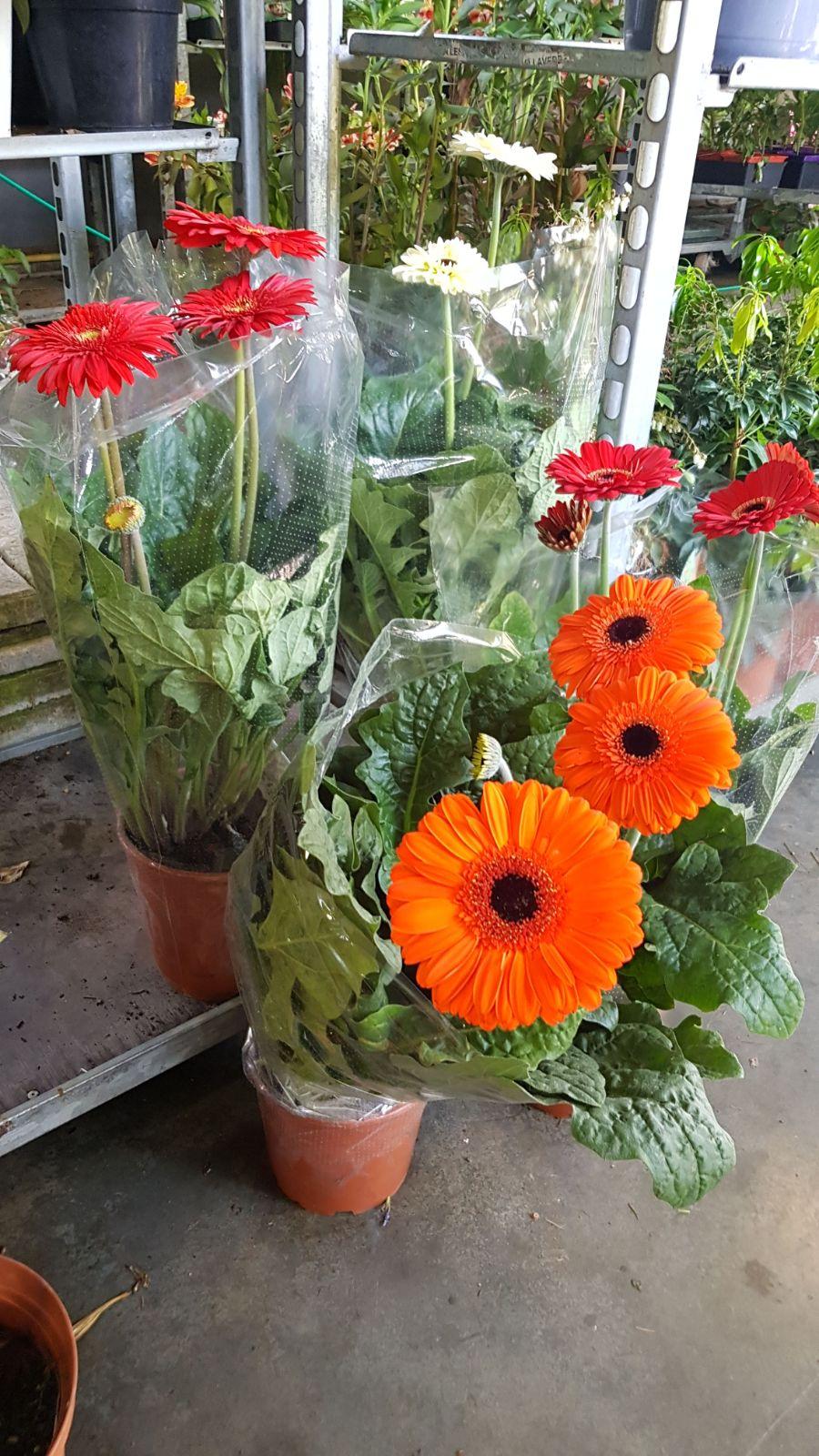 Jardinerie Pas Cher Toulouse bax destockage vegetal et horticole toulouse 31790 - 06.49